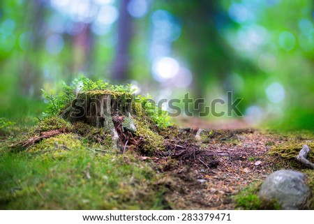 beautiful scandinavian forest with tree stump fungus, blueberry plants and magic blurred light in background