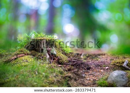beautiful scandinavian forest...