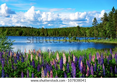 Beautiful Scandinavian summer landscape with lupines and lake #107838041