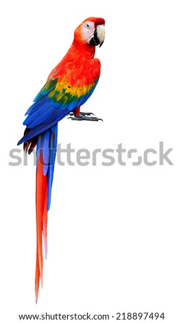 Shutterstock Beautiful Scarlet Macaw Bird with bare feet isolated on white background