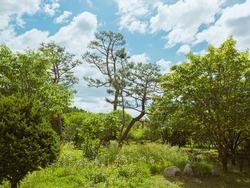 beautiful scenary of blue sky and greeny trees.