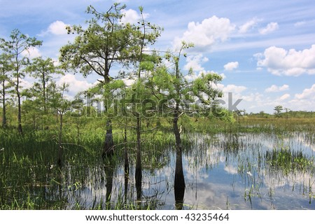 Beautiful scene of the Florida Everglades Landscape