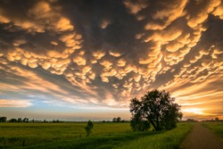 Beautiful scene of the Great Plains, USA at sunset. Lone tree below colorful mammatus clouds at the back of a supercell thunderstorm.