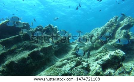 Beautiful Scenery in the Blue Sea, Underwater Ambience #1474721108