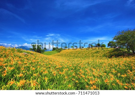 Beautiful scenery of daylily flowers with viewing platform in a sunny day