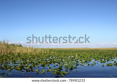 Beautiful scenery of lake in Everglades, Florida