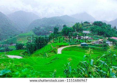Beautiful scenery of the rice fields of Cat cat Village. #1151686967