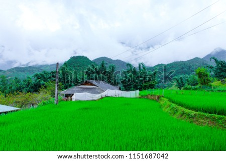 Beautiful scenery of the rice fields of Cat cat Village. #1151687042