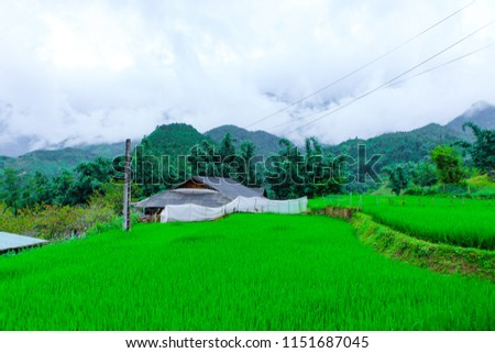Beautiful scenery of the rice fields of Cat cat Village. #1151687045