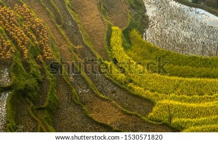 Beautiful scenery of Vietnam. Beautiful scenery of Vietnam #1530571820