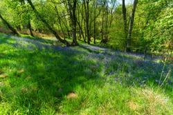 Beautiful scenery path to Devil's Pulpit, Finnich Glen in Scotland