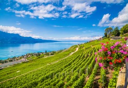 Beautiful scenery with rows of vineyard terraces in famous Lavaux wine region, UNESCO World Heritage Site since 2007, overlooking the northern shores of Lake Geneva, Canton of Vaud, Switzerland