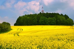 Beautiful scenery yellow rapeseed flowers in field with telecommunication tower