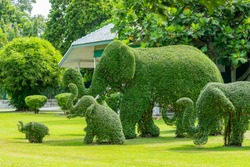 Beautiful sculptured shrubs, in form of elephants on a green lawn.