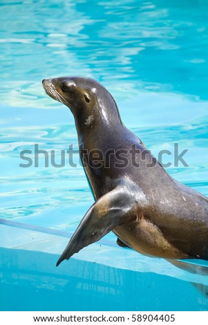 Beautiful sea lion in a natural environment