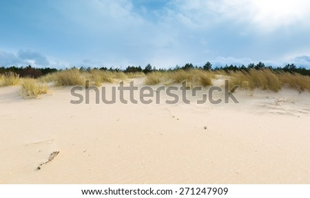 Beautiful sea shore with wild grass and shore plants. Baltic sea coast. #271247909