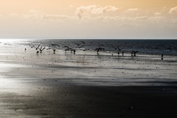 Beautiful seabird flight on a beach in Bretagne, France. A fairy and poetic image.
