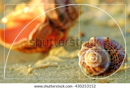 Beautiful seashells on the beach, close up. Golden Ratio concept #430253152