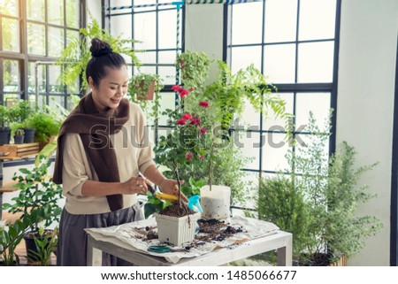 Beautiful senior ladies are happy to plant roses, fertilize, watering in the green house.Hobby concept #1485066677