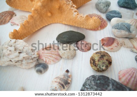 Beautiful set of colorful seashells and stones with a brown starfish. Nice decorative picture. Close-up. The side view. Natural background.