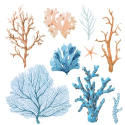 Beautiful set with watercolor hand drawn coral illustrations. Sea underwater life.