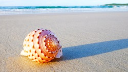 Beautiful shells on the beach in the summer