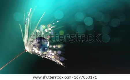 Beautiful shiny dew water drop on dandelion seed in nature macro. Soft selective focus, sparkling bokeh. Dark blue green background.