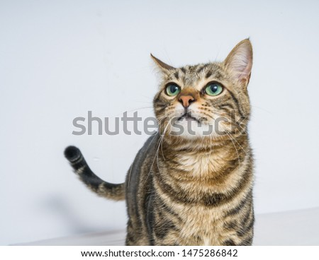 Beautiful short hair cat lying on the bed at home #1475286842