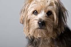Beautiful Shot of a Cute Looking Dog