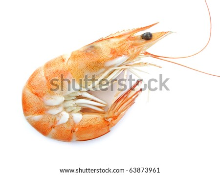 Beautiful Shrimp