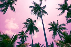 Beautiful silhouette coconut palm tree in sunshine day background color fun tone. Travel tropical summer beach holiday vacation or save the earth, nature environmental concept.
