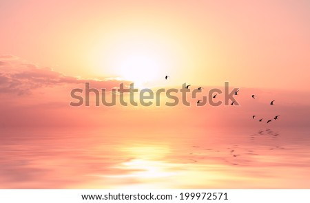 beautiful sky on sunset or sunrise with flying birds to the sun, natural background #199972571