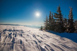 Beautiful slender fir trees grow among snow-covered snowdrifts on a hillside against a background of blue sky and bright moon on a frosty winter night. Concept of resting outside the city in winter