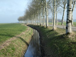 beautiful small brook lined with poplars and waterreflection