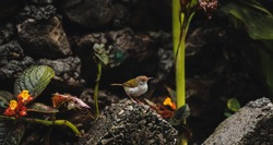 Beautiful small colorful bird searching for its food.  Dark moody images of nature showing small bird for wallpapers and themes. Moody effect photograph of nature.