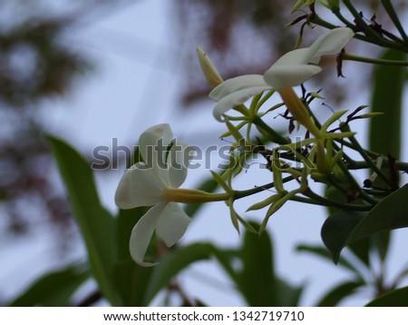 Beautiful small flowers #1342719710