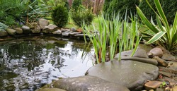 Beautiful small garden pond with stone shores and many decorative evergreens spring after rain. Selective focus. Nature concept for design