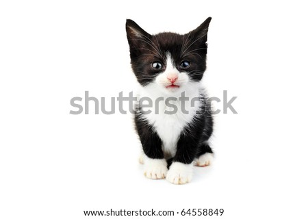 beautiful small kitten isolated on white