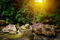 Beautiful small natural stream with many rocks among green tree in tropical rainforest. Peaceful ambience at cascade in riparian forest at Hin Lad waterfall. Top of tree with sunlight from the sky.