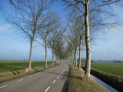 beautiful small road lined with poplars and waterreflection