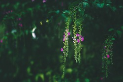 Beautiful small summer flowers, nature/floral background with copy space