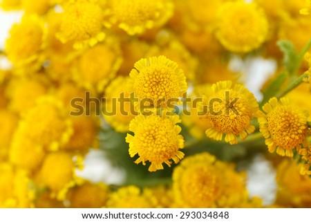 Beautiful small wild flowers close up - Shutterstock ID 293034848
