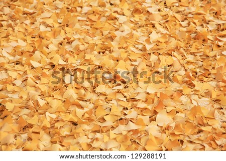 Beautiful small yellow autumn leaves background