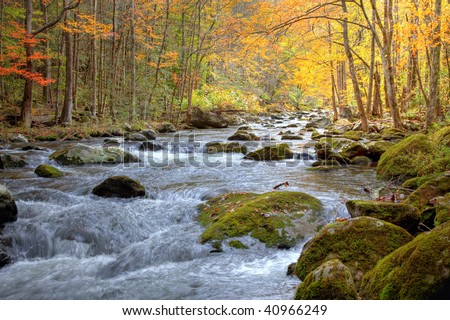 Beautiful Smoky Mountain stream in the Fall season, showing golden, red and green trees lining the stream and rushing water with moss covered rocks.