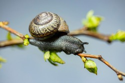 Beautiful snail crawls on a branch