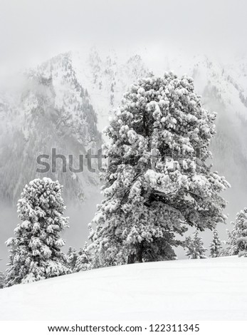 Beautiful snow-covered pine trees on the mountain Ahorn of the ski resort Mayrhofen - Austria