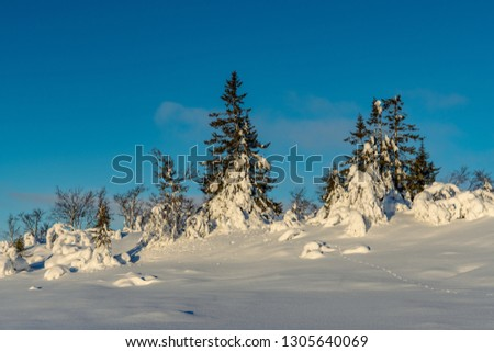 Beautiful snow covered trees and landscape high up in the northern Swedish mountains or fjeld world. Totally untouched area with only some small imprints from animals showing
