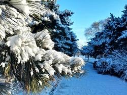 Beautiful snow in Beiling park, Shenyang, Liaoning, China