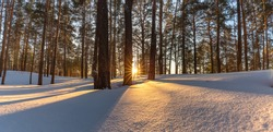 Beautiful snowy winter landscape panorama with forest and sun during golden hour. Winter sunset in forest panoramic view. Sun shines through trees and casts golden light on snow. Russia, Siberia.