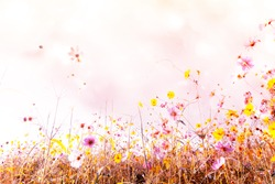 Beautiful Soft and blur of cosmos flowers with bokeh in vintage style for background.